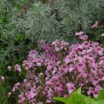 La gestion de la couleur en fleurissement