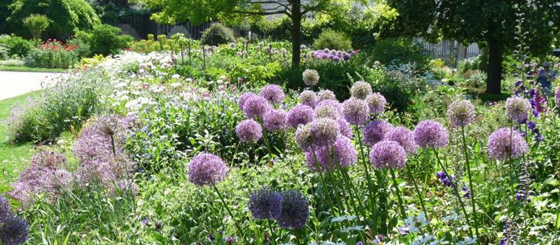 Floravenir formations bulbes en massif de printemps t automne et hiver floravenir - Printemps ete automne hiver et printemps ...