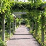 Reconnaître les végétaux en vue de leur utilisation