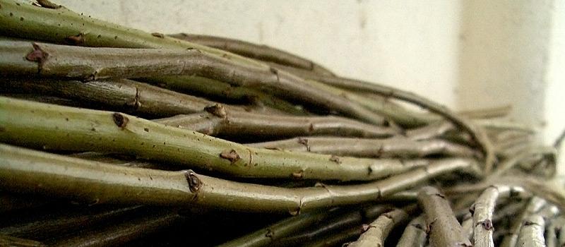Floravenir formations utiliser et travailler l 39 osier et for Travailler dans les espaces verts