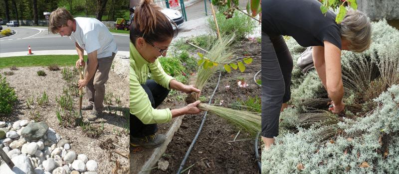 Planter,-entretenir-un-massif-de-plantes-vivaces-02