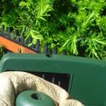 Taille raisonnée des petits végétaux d'ornement