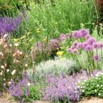 Concevoir un massif de plantes vivaces et arbustives