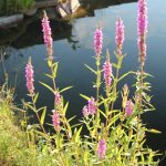 Utiliser la flore sauvage pour un fleurissement naturel