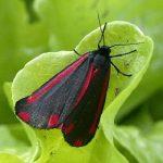 Reconnaissance Faune-Flore pour préserver la biodiversité