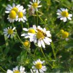 Lutte biologique: reconnaître et employer les insectes et plantes utiles